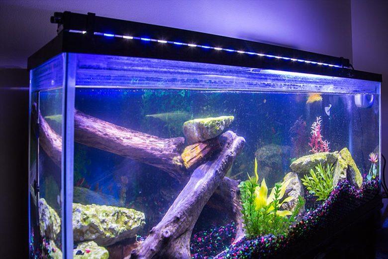 https://aquaristguide.com/best-automatic-fish-feeder/